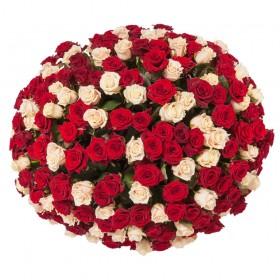 חלום-של-101 ורדים