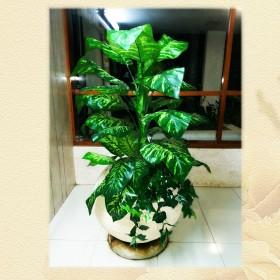 צמחיה מלאכותית - דיפנבכיה
