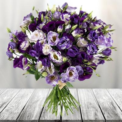 זר מליזיאנטוס סגול משלוחי פרחים בפתח תקווה